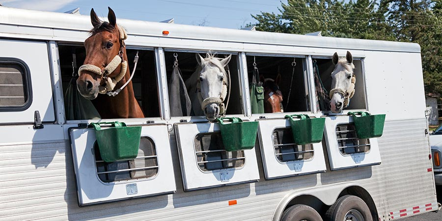 Stock photo of horses in a trailer