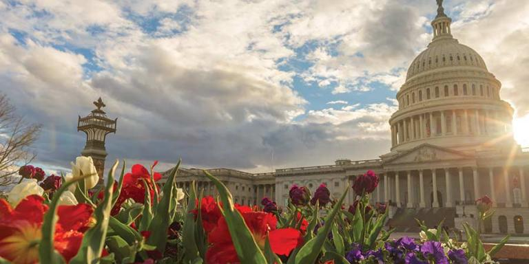 Image of the Capitol in spring